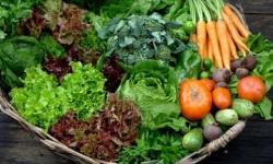 Estudo mostra que agricultura orgânica pode alimentar o mundo inteiro