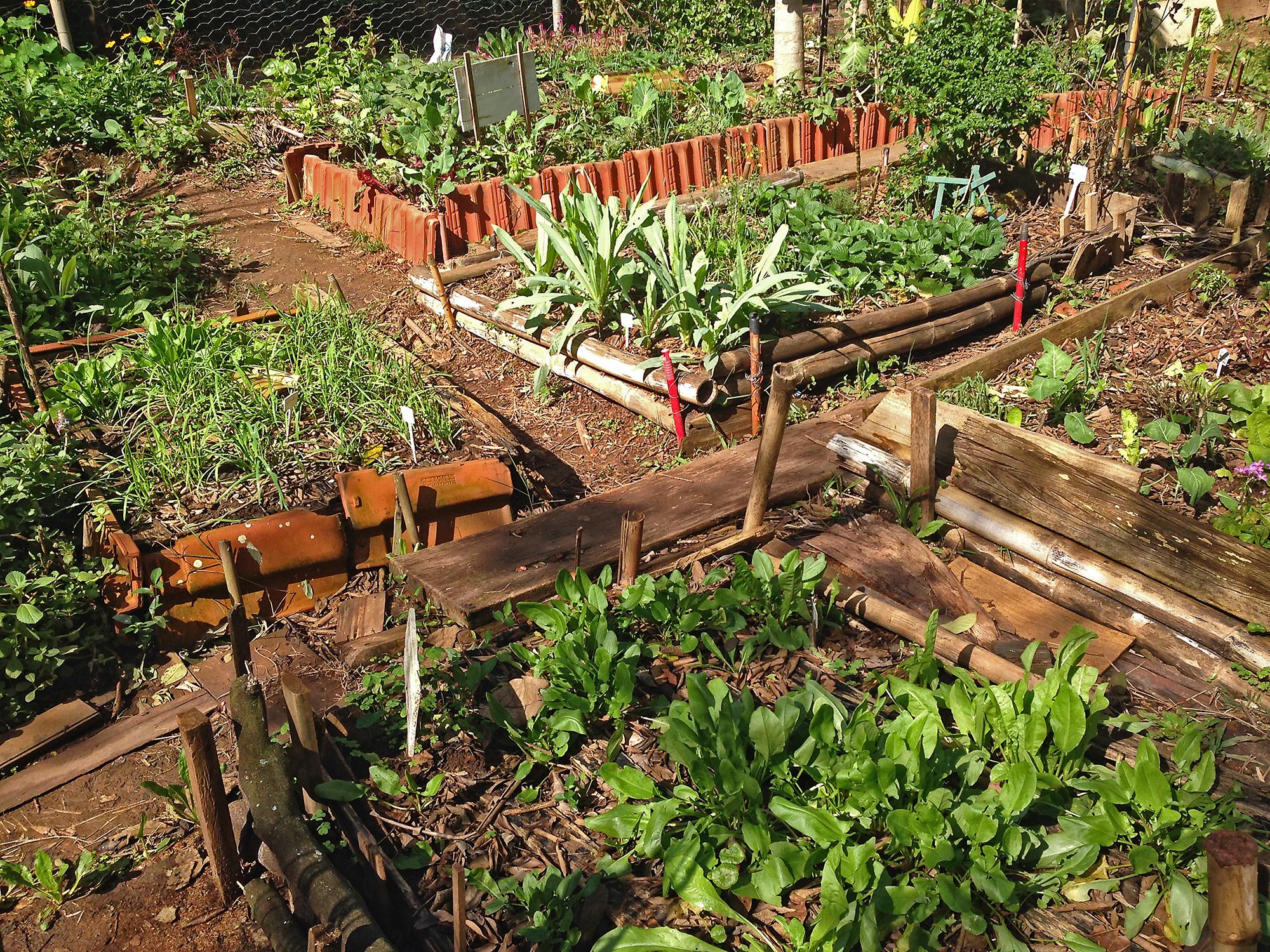 Conviver, educar e cultivar para colher
