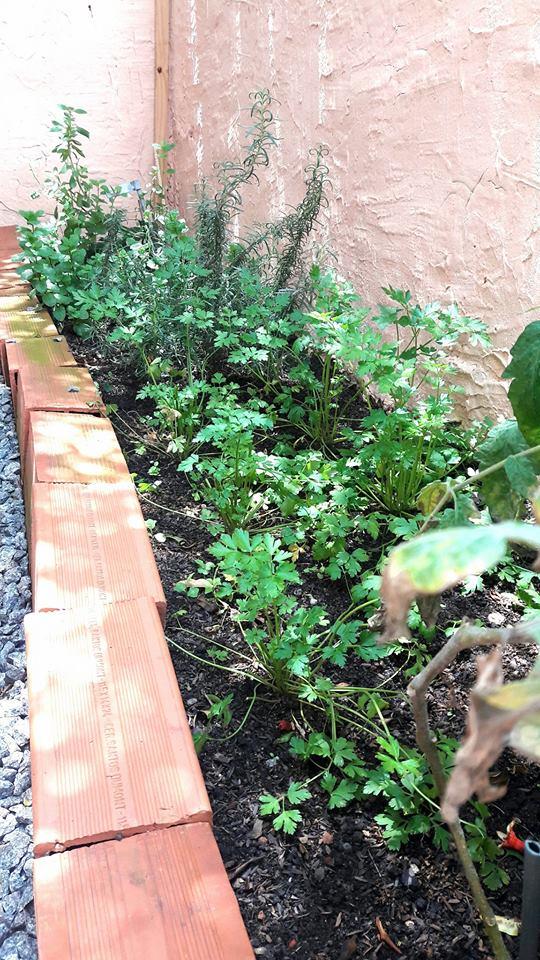 Criar uma horta é aceitar o tempo e sentir a vida